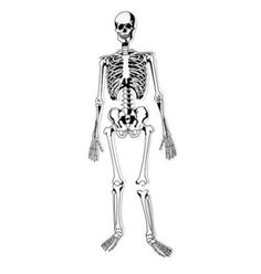 Doin' the Bone Dance and Other Creative Ways to Learn Bone Anatomy