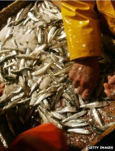 Overfishing of EU fisheries is costing £2.7bn (3.2bn euros) a year and 100,000 jobs, a report has said.