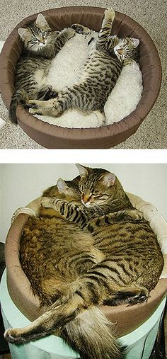 """Then And Now"" kitties :)"