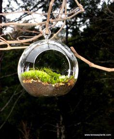 Hanging Glass Globe DIY Moss Terrarium Kit