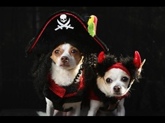 Little, an Alessandra breed, and Pants pose as a pirate and a devil at the Tompkins Square Halloween Dog Parade on October 20, 2012 in New York City. Hundreds of dog owners festooned their pets for the annual event, the largest of its kind in the United States.  Credit: John Moore/Getty Images