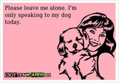 Leave me alone. I'm only speaking to my dogs today. dog wear, funni thing, little dogs, wear wig