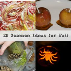 20 Science ideas for Autumn and Fall, includes apple bobbing, treacle toffee, autumn ice and much more #Autumn #Fall #Science