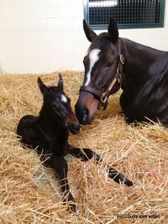 new babies, anim, baby horses, colt, the queen, baby boys, zenyatta, births, new moms