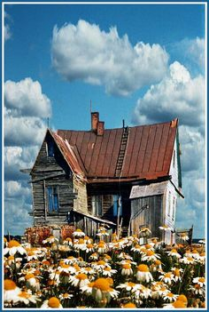"Old house accompanied by a field full of daisies. This would go under ""spookhouse"" but it's just too pretty!"