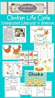 Little Bird Kindergarten Chicken Life Cycle Integrated LIteracy and Science