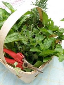 Summer Herb Harvest Tips