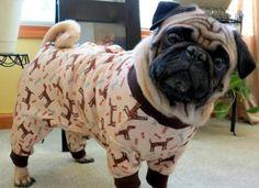 pajamas, animals, beds, dogs, pet, pugs, pjs, puppi, bedtime