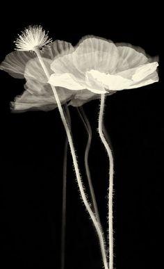 Linda Morrow •