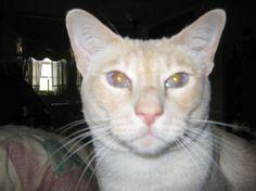 Christine M's cat, Simba.
