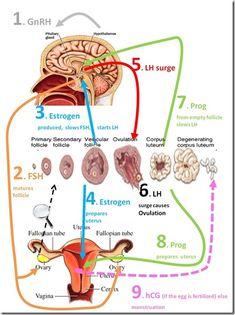 Nolvadex pct dosage epistane cycle