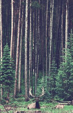 Into the Woods #HelloColor