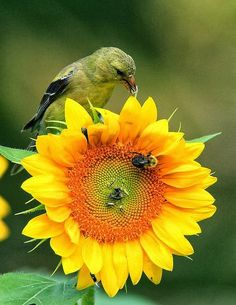 bird, bees and flower