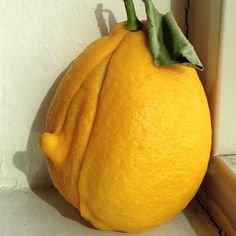 Penis lemon