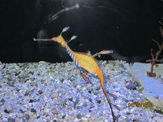 seahorse at Birch aquarium