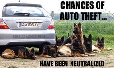 haha, no chances at all #german #shepherd #dog