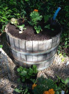 Small Space Gardening: Plant a Salad Bowl. birdsandblooms.com
