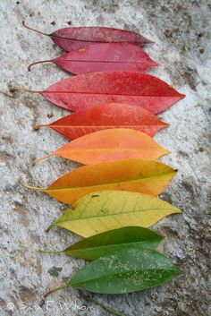 Challenge kids to make a rainbow with autumn leaves.