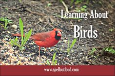 Learning About Birds: 6 Activities for Young Children from @Spelloutloud #homeschool