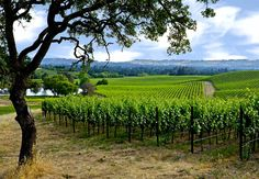 William Hill Estate Winery in Napa, California has the most beautiful picnic grounds overlooking Napa Valley. Great wines, great folks. They will even bring each wine out to your picnic table for your tasting. Be sure to make an appointment.