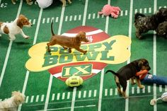 Puppy Bowl 2014: Lineup, TV time for Puppy Bowl X revealed