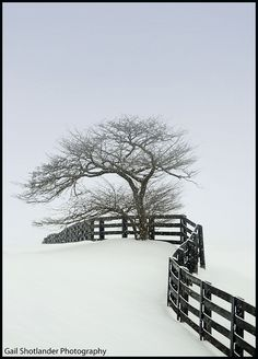 Tree and Fence in Snow