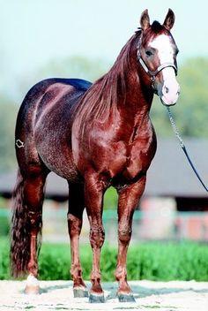 smart chic olena, quarter hors, beauti stallion, chic oleana, aqha stallion, paint horses, beauty, late stallion, stallion smart