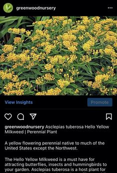 Go chech out our IG and Twitterz. @Greenwood Nursery @Greenwood Nursery #plants #gardening #perennials