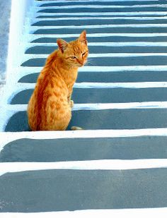 Cat on stairs | Flickr - Photo Sharing!