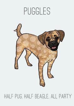 Party Puggle Print Modern Dog Art. $12.00, via Etsy.