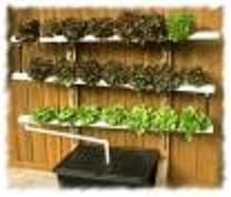 Nutrient film technique (NFT); could do this on our privacy fence #hydroponics