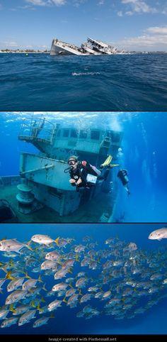 Explore the shipwrecks of the Cayman Islands.