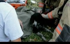 It was a miraculous rescue, out of a burning house came a firefighter with a limp dog in his arms.