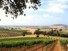 sea vacat, wine itali