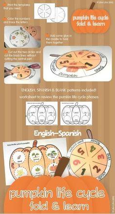 Pumpkin Life Cycle Fold & Learn