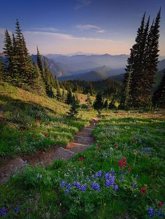 Nisqually Vista, Washington - Looking down the trail to Van Trump Park with Mount St. Helens in the background. Mount Rainier National Park, WA