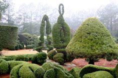 The Intercontinental Gardener: May 2010