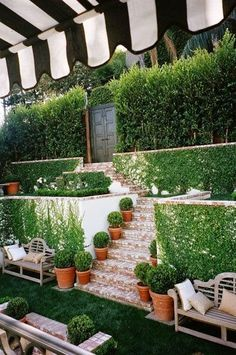 Boxwood garden with