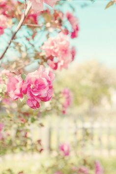 Floral fever.
