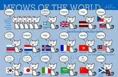 international kitties!