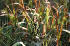 A beautiful spider web in Washington County, Kansas. Photo by Neil Croxton