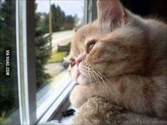 Me watching the pizza guy delivering in another house.