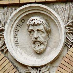 Herófilo de Calcedonia (Bitinia, c. 335 a. C. - 280 a. C.) Herófilo fue el primero en hacer disecciones del cerebro en público iniciando esta práctica médica junto a Erasístrato de Ceos en la Escuela de Alejandría en el siglo III a. C.   Hizo descubrimientos acerca de la disposición de los vasos del cerebro. Constató la sincronía del pulso con los latidos del corazón y afirmó que la inteligencia no se encuentra en éste, sino en el cerebro.