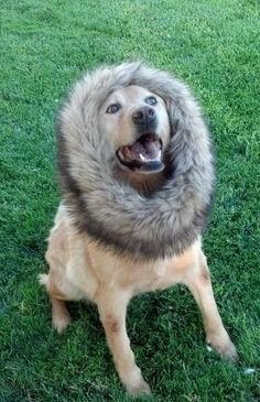 Rawr! I'm a lion