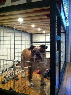 The Dog Suite - could be a nice bed+crate solution for small bedrooms