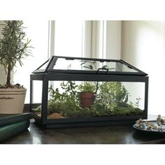 Smith & Hawken® Steel and Glass Terrarium