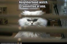 Neighborhood Watch!
