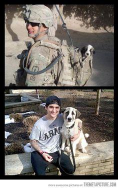 Puppy found in combat. Then & Now. cute!