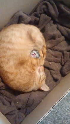 """My cat guarding her first and only baby"""