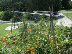 Another trellis idea - from the Texas Discovery Garden